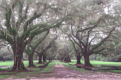 Oaks In Laurel Hill Park, Mount Pleasant, Sc Print by Rick Berk