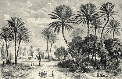Desert Drawing - Oasis Of Gafsa  Tunis by Charles Brabant