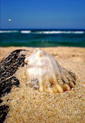 Ocean Beyond A Shell Original by Kaye Menner