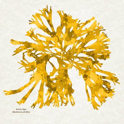 Alga Mixed Media - Ocean Seaweed Plant Art Rhodomenia Sobolifera Square by Christina Rollo