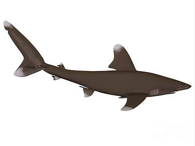Oceanic Whitetip Shark Profile Print by Corey Ford