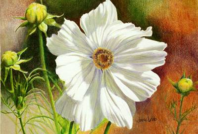 Colored Pencil Painting - October Flower Cosmos  by Janae Lehto