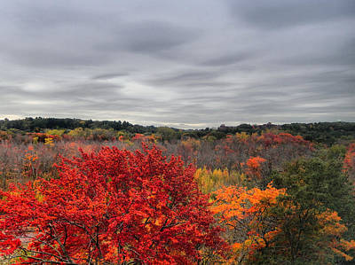 Tree Photograph - October Foliage In New England by Lilia D
