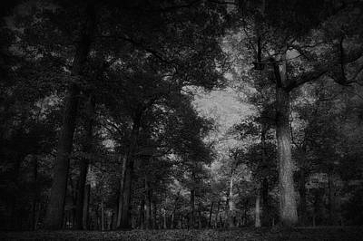 October In The Forest Bw Print by Thomas Woolworth