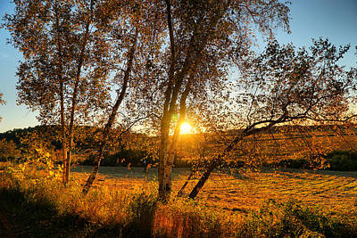 Autumn Photograph - October Sunset Golden Glow by Lilia D
