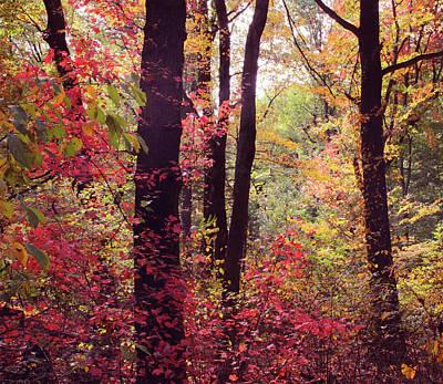 October Woodland Print by Jessica Jenney
