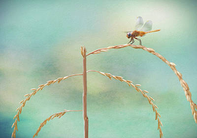 Dragonfly Eyes Photograph - Odonata by Steven Michael