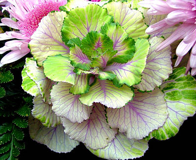 Lettuce Digital Art - Of Cabbages And Pinks by Mindy Newman