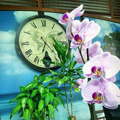 Orchids Photograph - Timeless Flower by Annie Nb