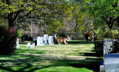 Photograph - Oh Deer  by Brynn Ditsche