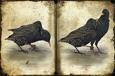 Starlings Digital Art - Oh No You Didn't by Lois Bryan