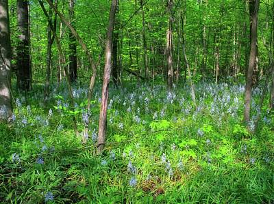 Forest Floor Photograph - Ohio Wildflowers In Spring by Dan Sproul