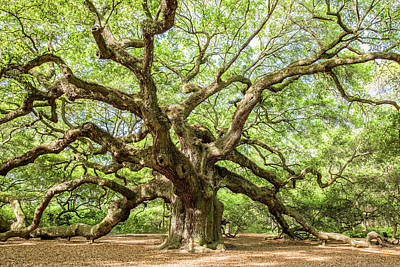 Angel Oak Photograph - Old Angel by Jon Glaser