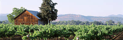Winery Photograph - Old Barn In A Vineyard, Napa Valley by Panoramic Images
