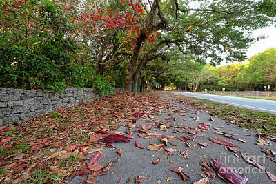 Photograph - Old Cutler Road Coral Gables by Eyzen Medina