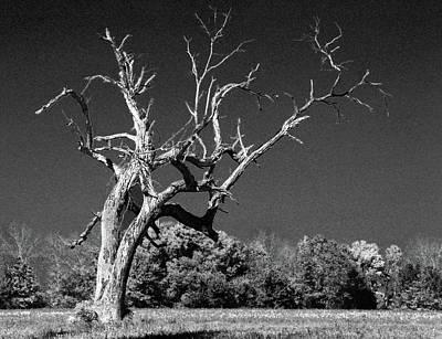 Old Dead Tree Again Print by Michael Thomas