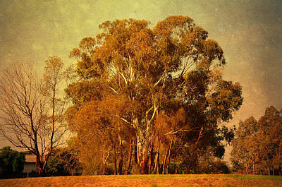 Manipulation Photograph - Old Gum Tree by Georgiana Romanovna