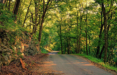 Photograph - Old Plank Road by Cricket Hackmann