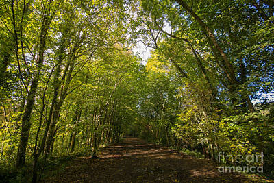 Abbey Photograph - Old Railway Line by Stephen Smith
