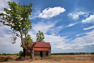 Old Rustic Vintage Farm House And Tree Print by Dan Carmichael