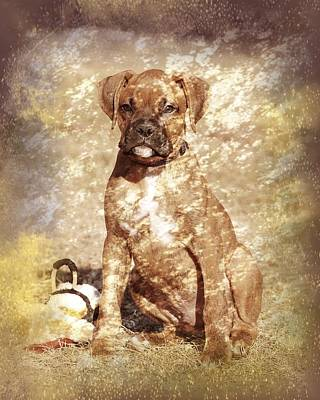 Old Time Boxer Portrait Print by Angie Tirado
