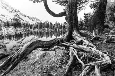 Tree Roots Photograph - Old Tree by Susanne La.