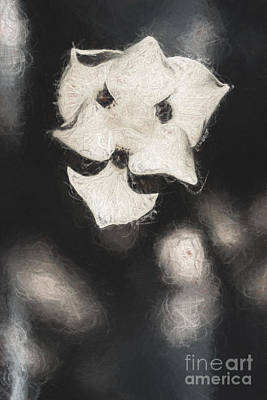 Tattered Photograph - Old Weathered Flowers by Jorgo Photography - Wall Art Gallery