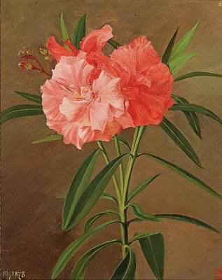 Oleanders Painting - Oleander Flowers by Josef Schuster