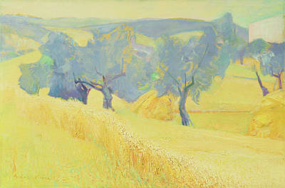 Olive Tree Painting - Olive Trees In Tuscany by Antonio Ciccone