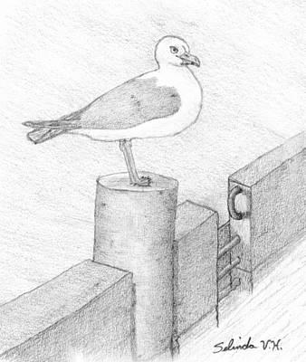 Herring Drawing - On A Perch by Selinda Van Horn