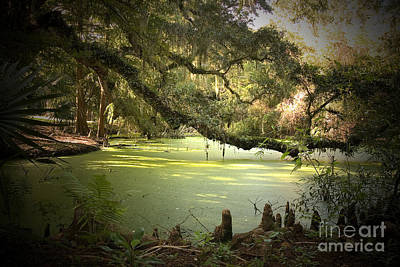 Cypress Trees Photograph - On Swamp's Edge by Scott Pellegrin