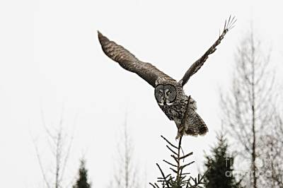 Owl Photograph - On The Hunt by Larry Ricker