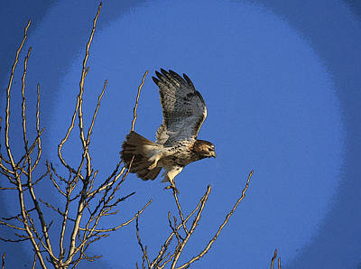Red Tail Hawks Mixed Media - On The Move by Robert Pearson