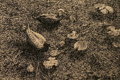 Drawing - On The Pond by Terry Perham