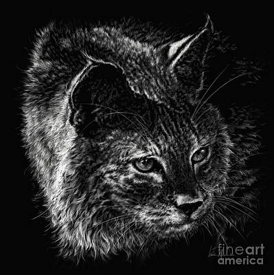 On The Prowl- Bobcat Print by Laurie Musser