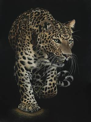 Cheetah Drawing - On The Prowl by Shone Chacko