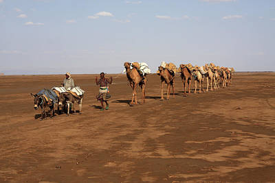 Camel Photograph - On The Way To Market by Aidan Moran