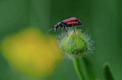 Bugs Photograph - On Top Of The World by Linda Howes