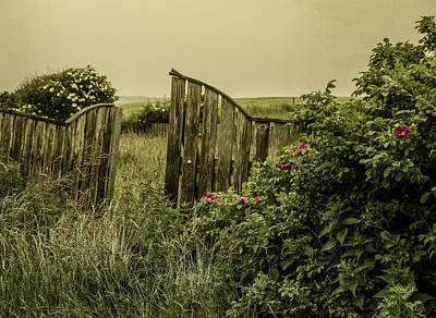 Photograph - Once Was A Garden by Odd Jeppesen