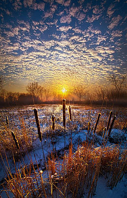 Cattails Photograph - One Day At A Time by Phil Koch