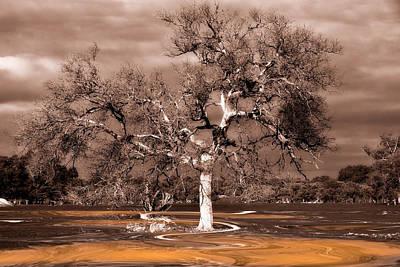 Imaginitive Digital Art - One Fine Tree by Heather Thorning