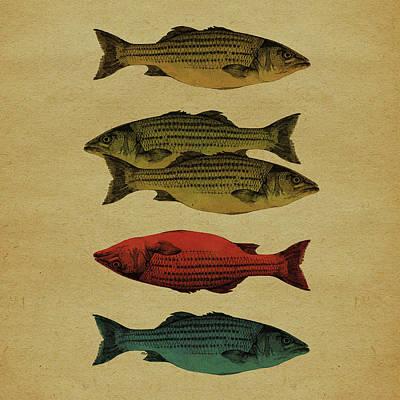 Fish Mixed Media - One Fish, Two Fish . . . by Meg Shearer