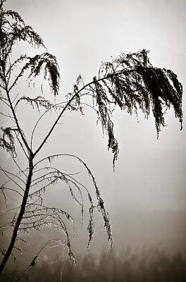 Web Of Life Photograph - One Foggy Morning by Carolyn Marshall