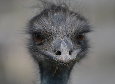 Emu Digital Art - One Of Those Days by Richard Andrews