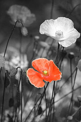 Colourized Photograph - One Red Poppy by Bonnie Bruno