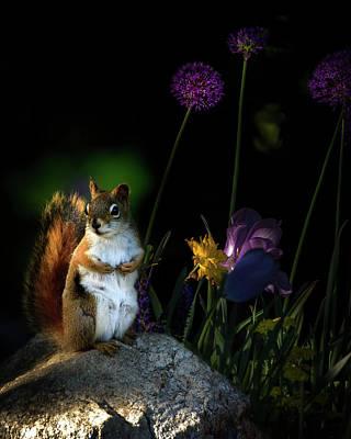 One Red Squirrel  Print by Bob Orsillo
