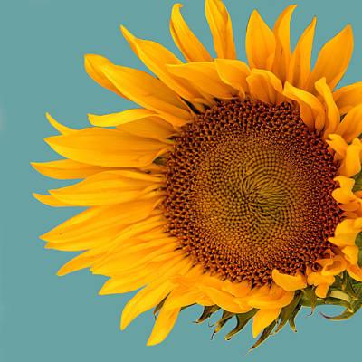 One Sunflower Tournesol Print by William Dey