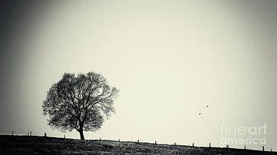 Pinhole Photograph - One Tree by Angela Doelling AD DESIGN Photo and PhotoArt