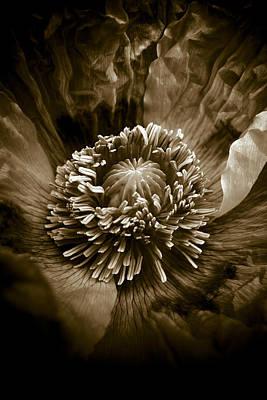 Garden Photograph - Opium Poppy Papaver Somniferum by Frank Tschakert