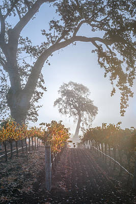 Winery Photograph - Opolo Vineyard by Joseph Smith